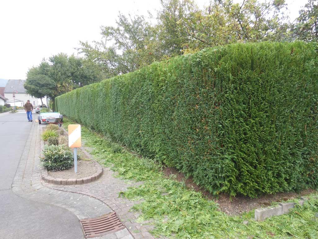 Heckenpflege mit Haus und Garten Westerwald